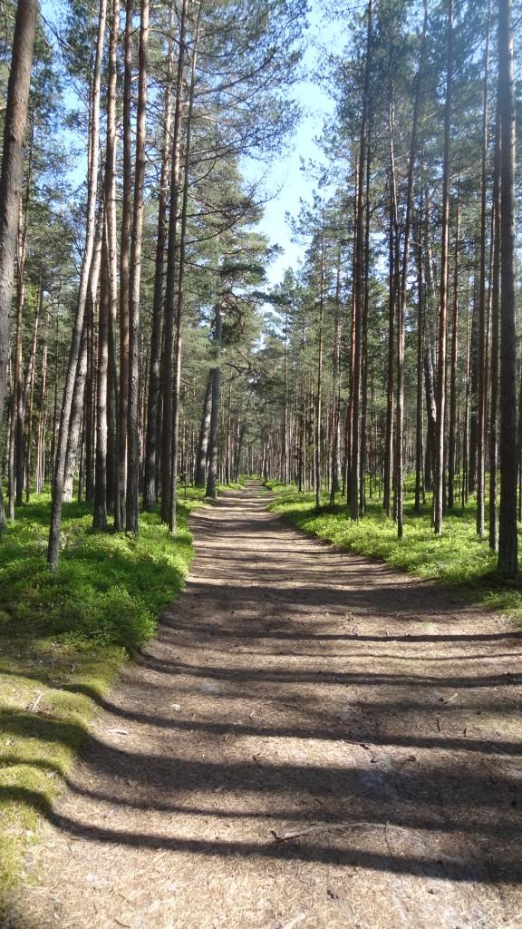 Liktenīgais mežs