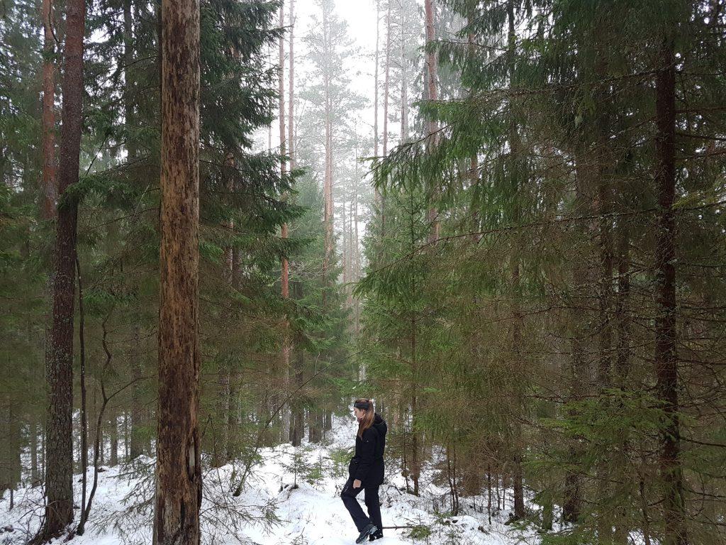 Latvijas meža ainava