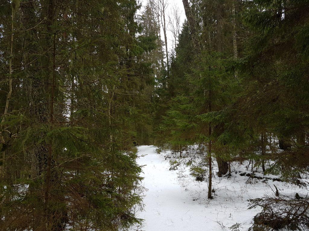 Latvijas mežu ainava